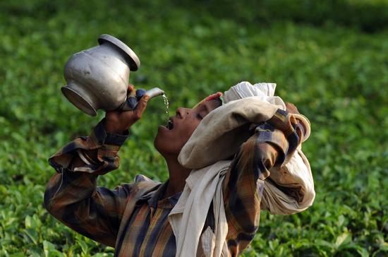 Một phụ nữ đang uống nước trong lúc nghỉ ngơi trên một bãi trồng chè ở Siliguri, Ấn Độ.