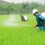 Ô nhiễm môi trường do thuốc trừ sâu